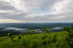 Kakamega National Park, Kenya