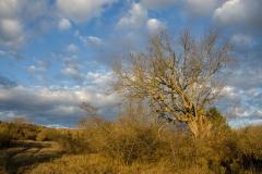 Vashlovani Nature Reserve, Georgia