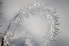 Ice crystals, Isle of Vilm, Germany