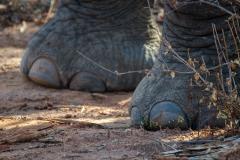 Elephant feet in Lower Zambezi National Park, Zambia