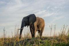 Elephant in Lower Zambezi National Park, Zambia