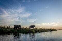 Elephants in Lower Zambezi National Park, Zambia