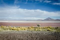 Eduardo Abaroa Andean Fauna National Reserve, Bolivia