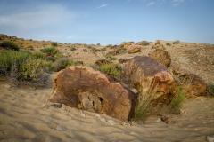 fossilized trees, Makhtesh Ramon, Israel